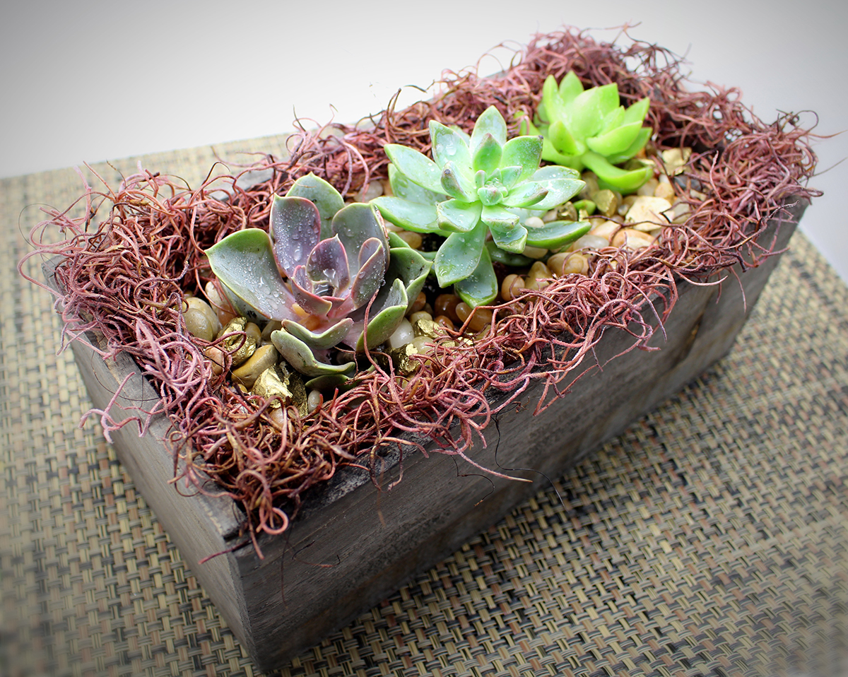 succulent garden with spanish moss in distressed w | chicago events
