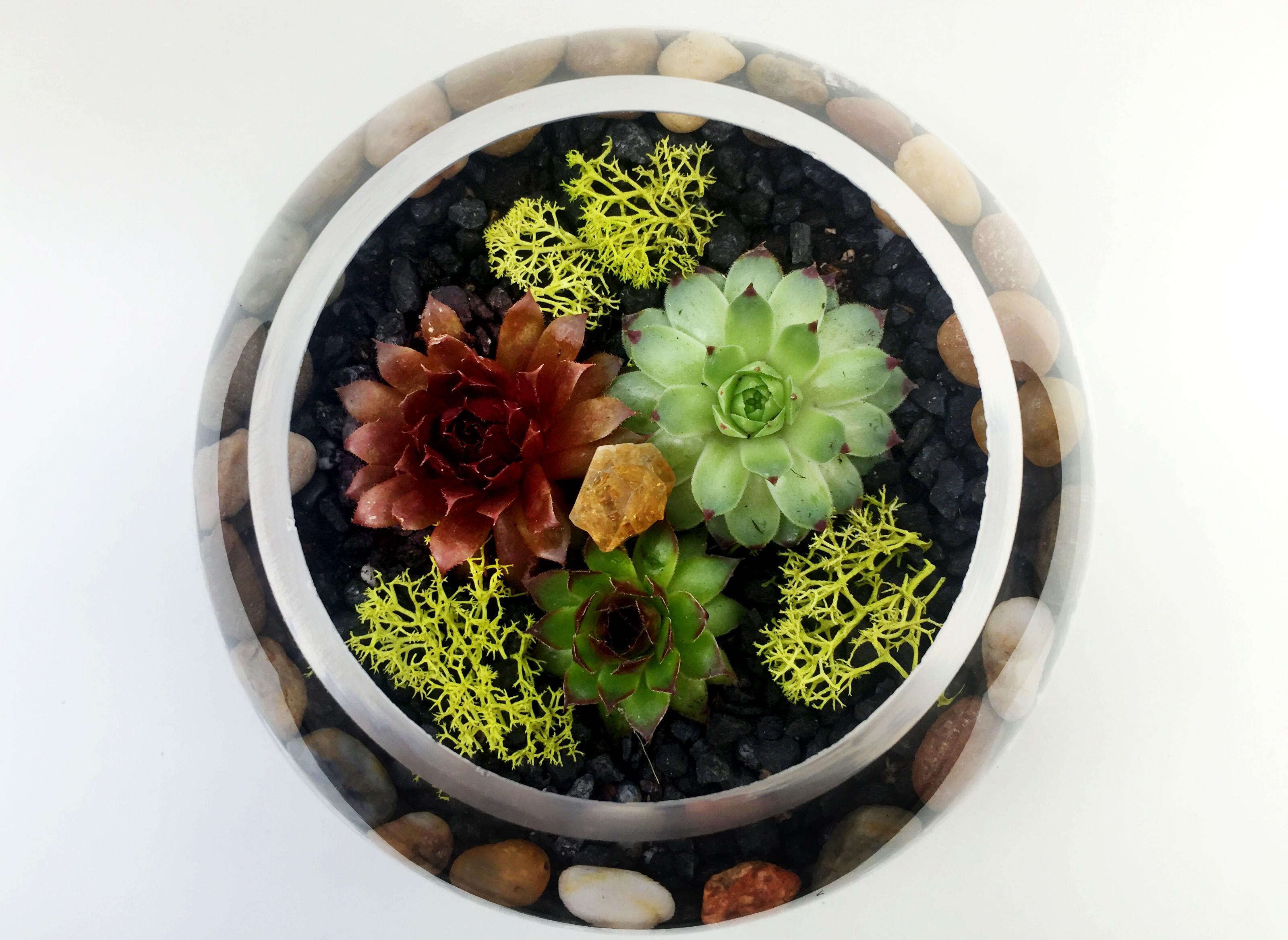 Glass Rose Bowl Succulent Terrarium with Citrine Quartz Crystal at Gideon  WellesPrivateFundraiserSpecial