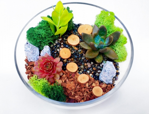 Succulent Terrarium In Sloped Glass Bowl W Wood P Harrsiburg Events