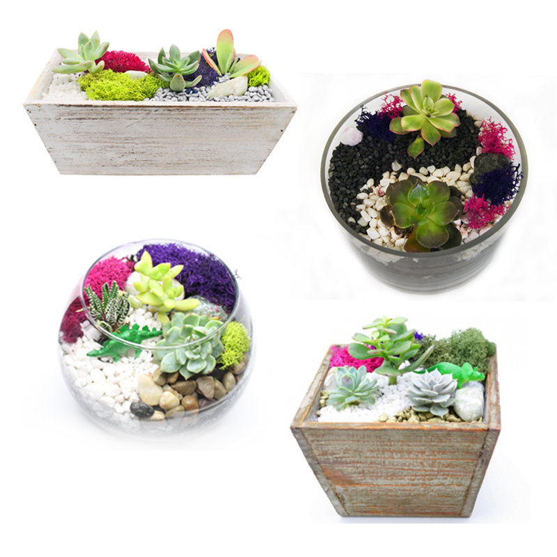 Succulent Terrarium In Glass And Wood Container Mashup At Industria