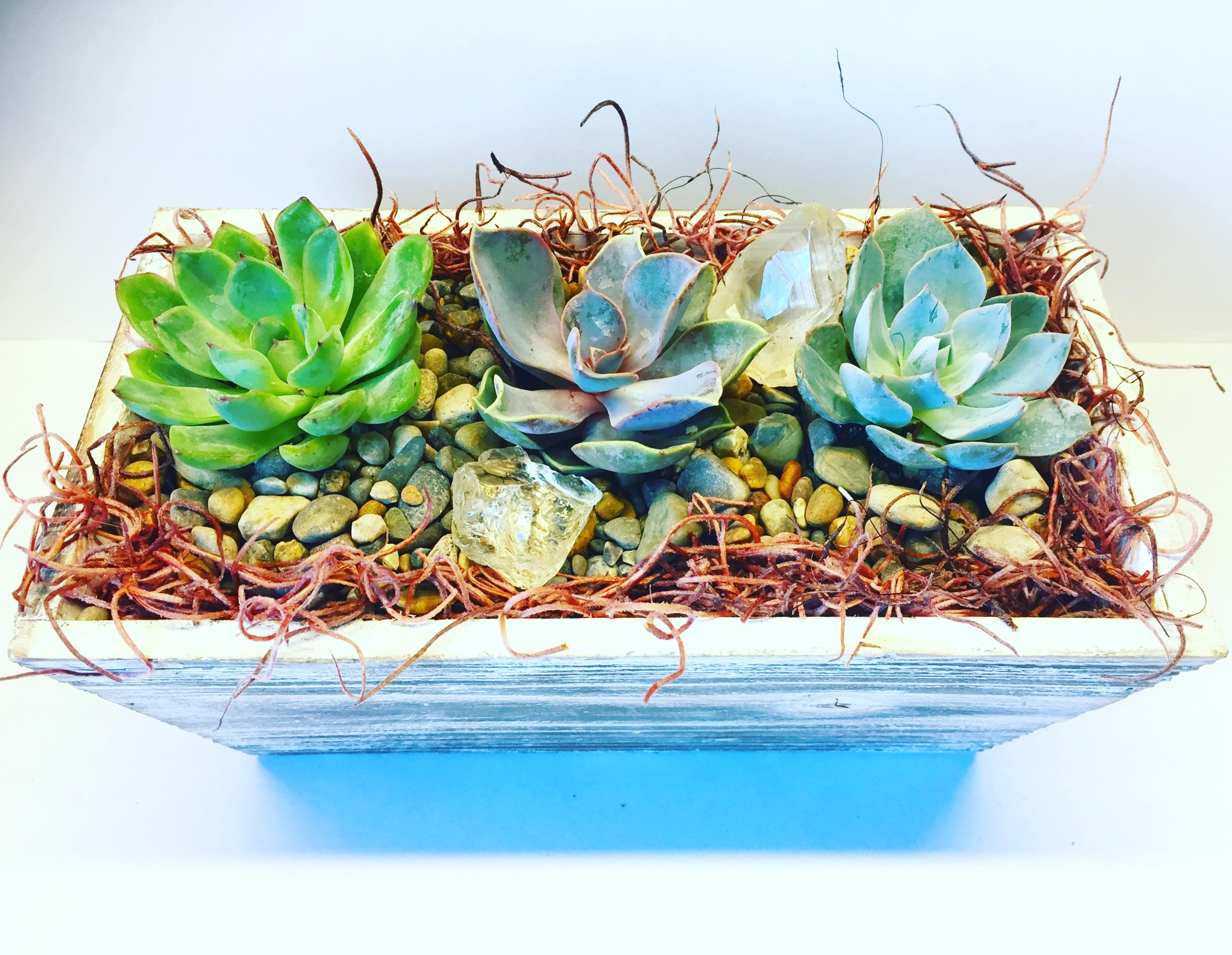rustic succulent garden at mimi's cafe desert ridg | phoenix events
