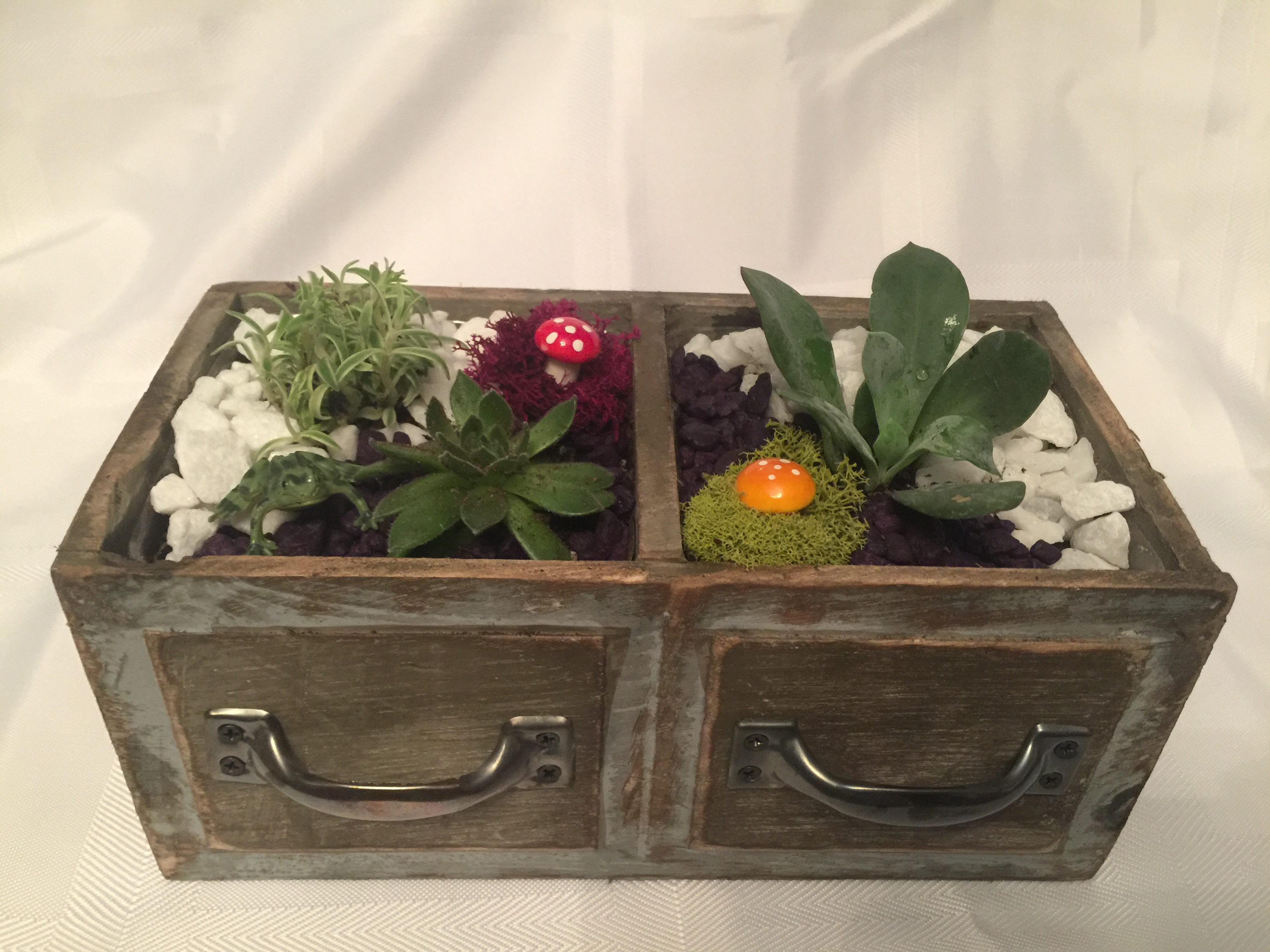 Succulent Terrarium in Double Drawer - You Design | Newark Events
