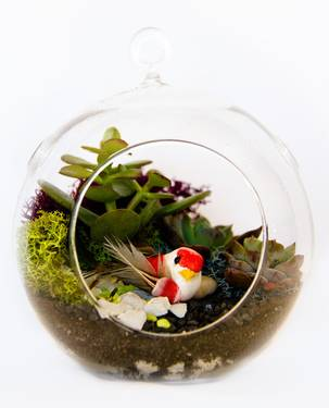 A Succulent Terrarium Birds Nest in Hanging Globe plant nite project by Yaymaker