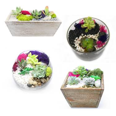 A Succulent Terrarium in Glass and Wood Container Mashup plant nite project by Yaymaker