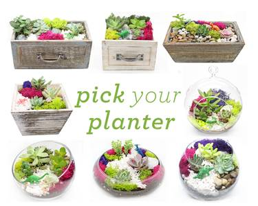 A Pick Your Planter Succulents with Wood and Glass Assortment plant nite project by Yaymaker
