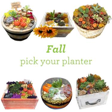 A Fall Pick Your Planter plant nite project by Yaymaker