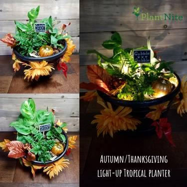 A AutumnThanksgiving Lightup Tropical Planter plant nite project by Yaymaker