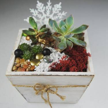 Christmas Succulent Arrangement.Christmas Shine At Rusty Pelican Red Deer Ab Ca Yaymaker