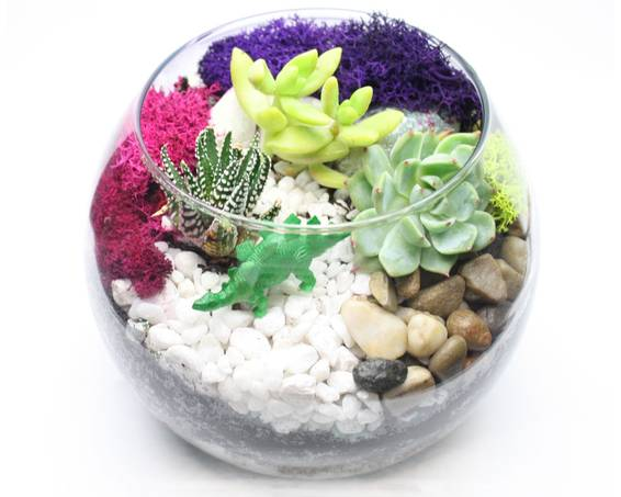 A Succulent Terrarium in Rose Bowl plant nite project by Yaymaker