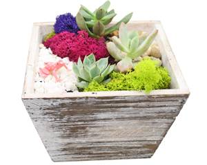 A Succulent Terrarium in Distressed Wood Tapered Square plant nite project by Yaymaker