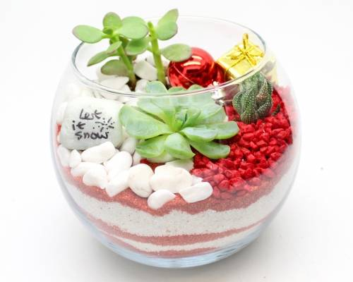 A Succulent Terrarium in Rose Bowl  Christmas Sand Art plant nite project by Yaymaker