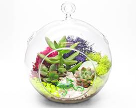 A Succulent Terrarium in Hanging Glass Globe plant nite project by Yaymaker