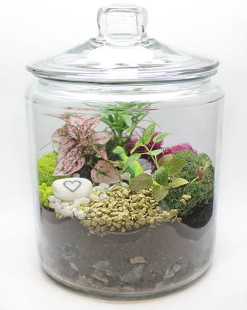 A Tropical Terrarium in Apothecary Jar plant nite project by Yaymaker