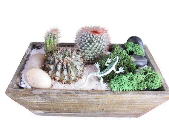 A Cacti Terrarium in Light Wood Rectangle Planter plant nite project by Yaymaker