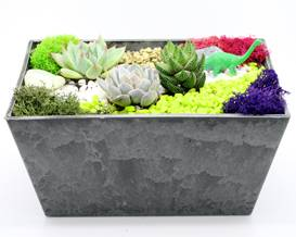 A Succulent Terrarium in PolyPro Slate Rectangle plant nite project by Yaymaker