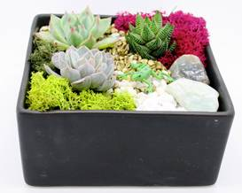 A Succulent Garden in Black Ceramic Planter plant nite project by Yaymaker