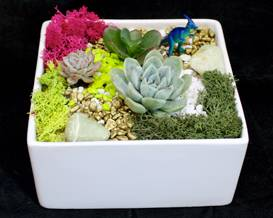 A Succulent Garden in White Ceramic Planter plant nite project by Yaymaker