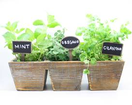 A Herb Garden in 3 section wooden planter plant nite project by Yaymaker