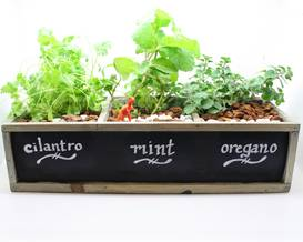 A Herb Garden in Chalkboard Planter plant nite project by Yaymaker
