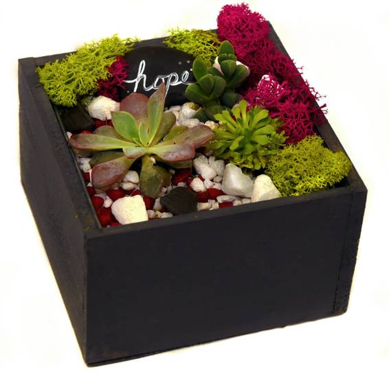 A Succulent Terrarium in Wooden Box w Zinc Liner plant nite project by Yaymaker