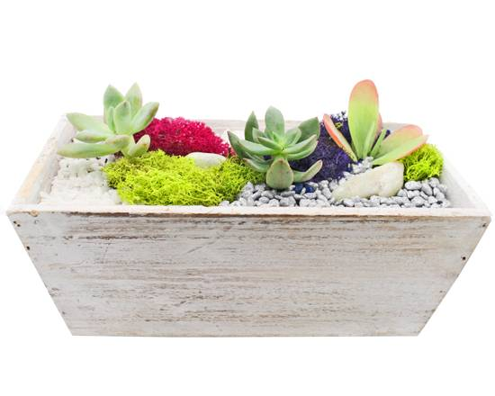 A Succulent Terrarium in White Wash Wood Tapered Rectangle plant nite project by Yaymaker