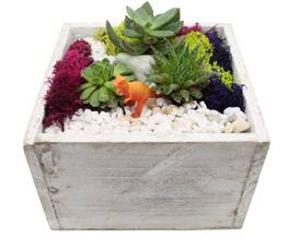 A Succulent Terrarium in White Wash Wood Cube plant nite project by Yaymaker