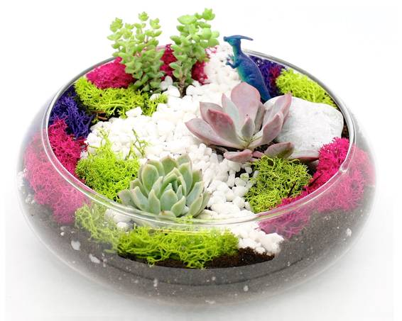 A Succulent Garden in Glass Lily Bowl plant nite project by Yaymaker