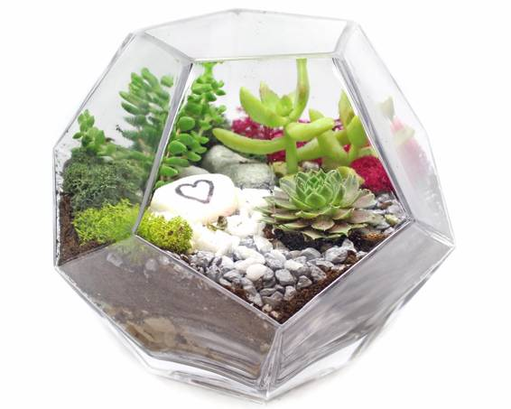 A Succulents in Geometric Prism Glass Terrarium plant nite project by Yaymaker
