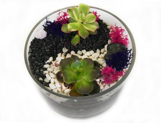 A Yin Yang Succulents in Glass Cylinder plant nite project by Yaymaker