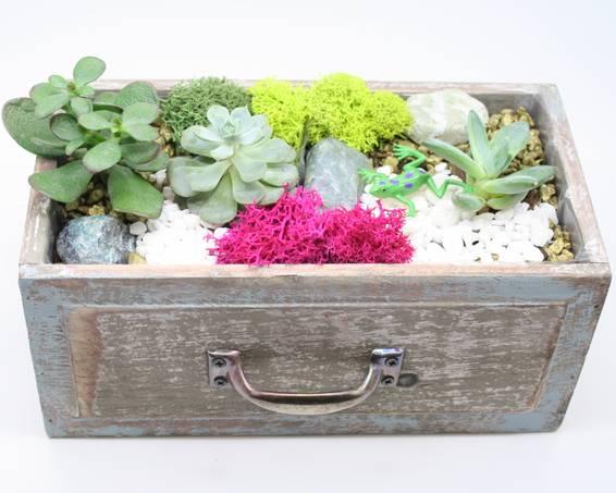 A Succulent Terrarium in Wooden Drawer plant nite project by Yaymaker
