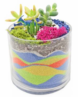A Succulent Terrarium in Glass Cylinder  Sand Art 2 plant nite project by Yaymaker