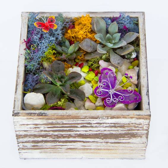 A Succulent Butterfly Garden in Distressed Wood Cube plant nite project by Yaymaker