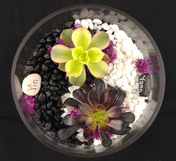 A YIN AND YANG TERRARIUM II plant nite project by Yaymaker