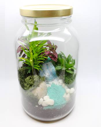 A Tropical Foliage Terrarium in a Jar  Waterfall Paradise plant nite project by Yaymaker