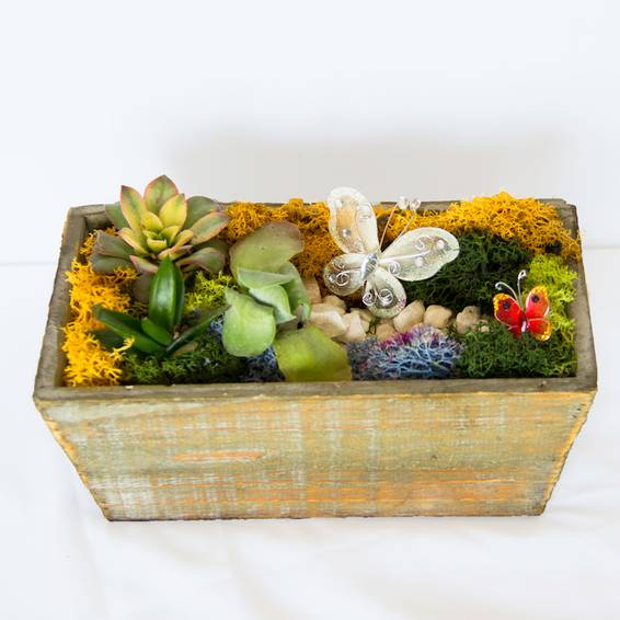 A Succulent Butterfly Garden in Light Wood Tapered Rectangle plant nite project by Yaymaker