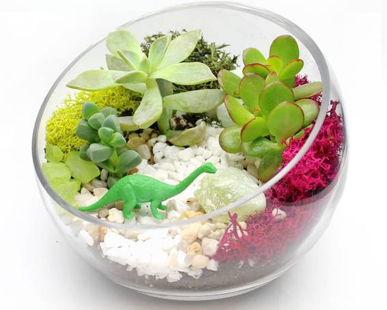 A Succulent Terrarium in 65 Glass Slope Bowl plant nite project by Yaymaker