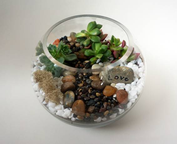 A Glass Rose Bowl Succulent Terrarium with Wish Rock plant nite project by Yaymaker