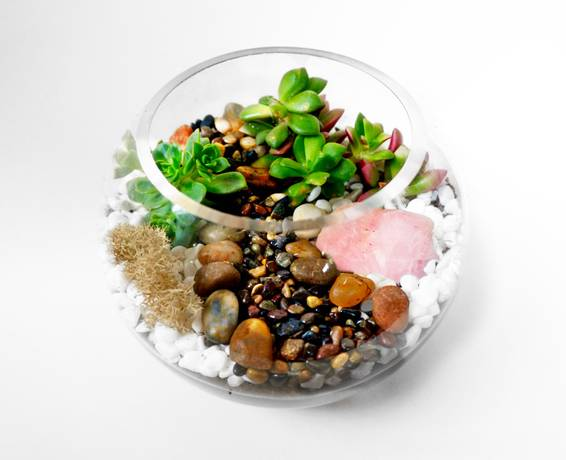 A Glass Rose Bowl Succulent Terrarium with Rose Quartz Crystal plant nite project by Yaymaker