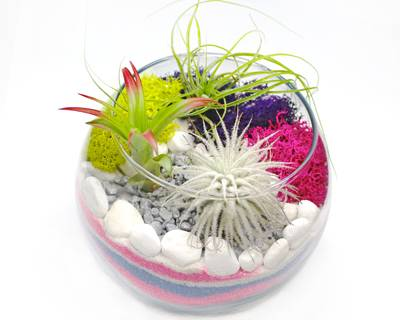 A Air Plant Terrarium in Glass Rose Bowl  Sand Art plant nite project by Yaymaker