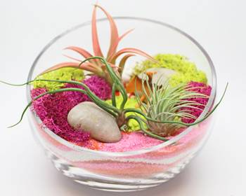 A Air Plant Terrarium in Glass Slope Bowl  Sand Art plant nite project by Yaymaker