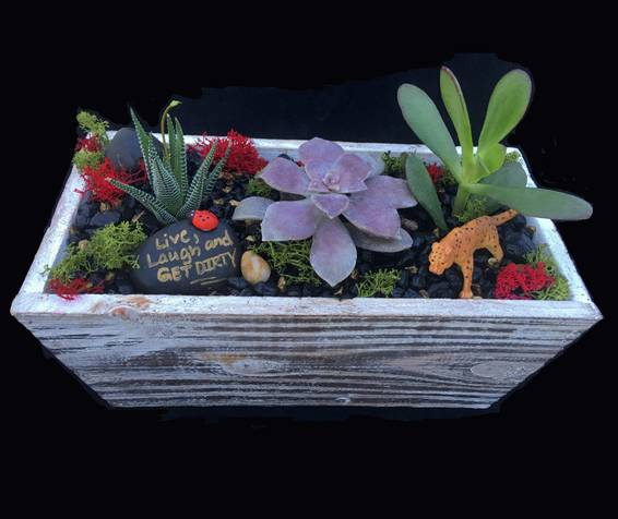 A Wood Rectangular Terrarium plant nite project by Yaymaker