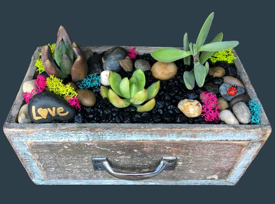A WOOD DRAWER GARDEN plant nite project by Yaymaker