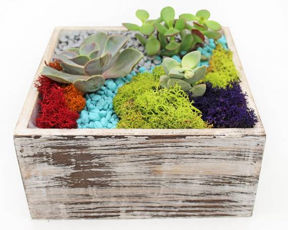A Succulent Terrarium in Distressed Wood 7quot Square plant nite project by Yaymaker