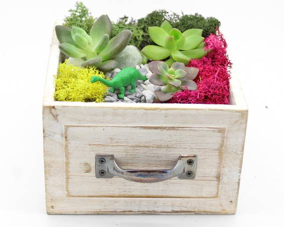 A Succulent Terrarium in Square Light Wood Drawer plant nite project by Yaymaker