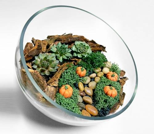 A Autumn Themed Sloped Glass Bowl Succulent Terrarium WDecorative Pumpkins plant nite project by Yaymaker