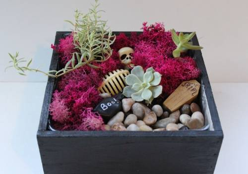 A Spooky Halloween Succulent Terrarium in Square Planter plant nite project by Yaymaker