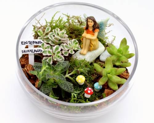 A Succulents in Slope Bowl  Woodland Fairy Garden plant nite project by Yaymaker