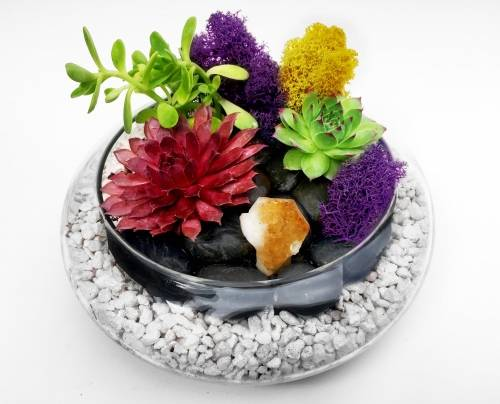 A Glass Lily bowl Succulent Terrarium WBlack Rocks and Citrine Crystal plant nite project by Yaymaker