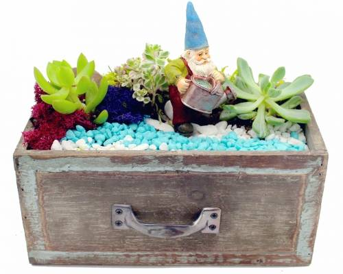 A Succulent Gnome Garden in Drawer plant nite project by Yaymaker
