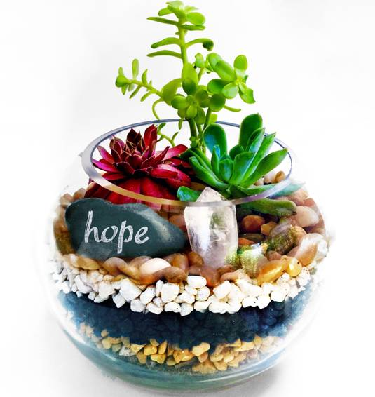 A Glass Rose Bowl Succulent Terrarium W Hope Wish Rock and Clear Quartz Crystal plant nite project by Yaymaker